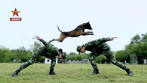 警犬Vlog!这是一条有网红气质的搜救犬