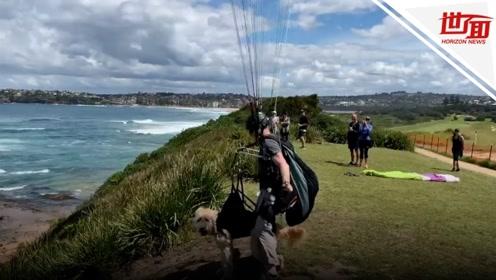 男子带着狗狗一同滑翔伞飞行 狗的表情亮了:我太难了