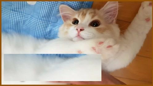 趣味小猫咪 爱伸懒腰的小猫咪