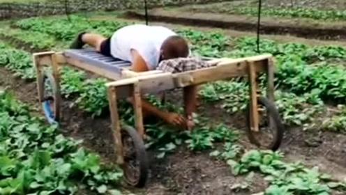 劳动人民的智慧,农村大叔发明的神器,居然可以趴着拔草!