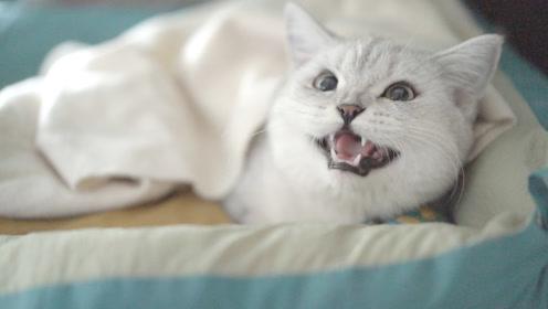 爱赖床的猫咪,像不像每天早上不想上班的你?