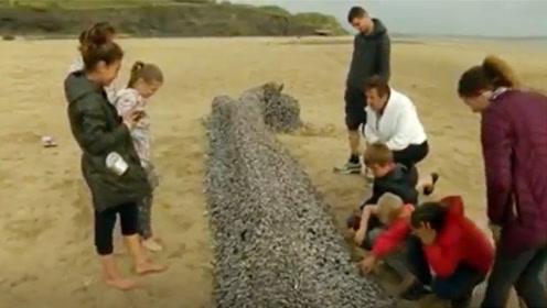 游客在沙滩上发现一根烂木头,老渔民赶来很高兴,这下赚大了