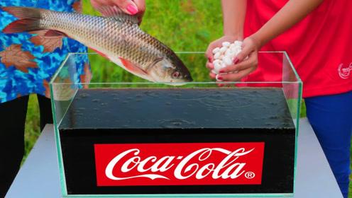 泡过可乐和曼妥思混合的鱼,会是什么味道?网友:谁吃谁知道