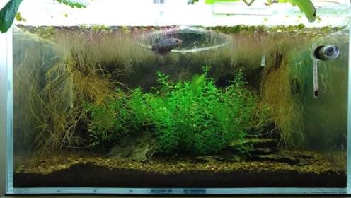 什么样的鱼缸才是真正的生态鱼缸?网友:这就像是一条河呀