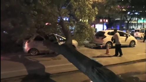 祸从天降!大树突然倒下砸中轿车致其变形,所幸车上四人无碍