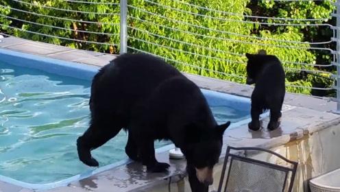 泳池遭到非法入侵,警察赶到却哭笑不得,黑熊一家三口变老赖