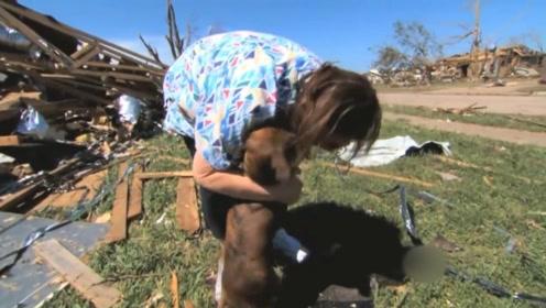 狗狗从自家院子里离奇失踪,经历了两个月的流浪,还能一眼认出主人