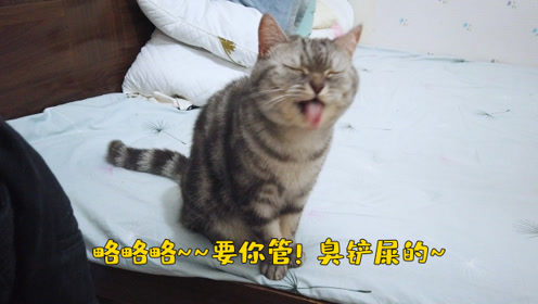 两只猫星人又放飞自我,拆家了!说说它俩,还不开心