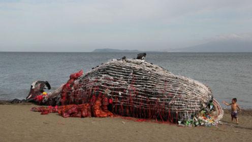 """""""深海巨兽""""海滩自尽,人们割开肚子一看,画面令人触目惊心"""