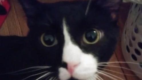 猫咪趁主人不注意溜进洗衣机,被主人洗了十分钟后,居然没一点事