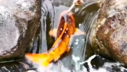 金鱼都努力往上游跑,我们有什么理由懒惰,加油做好自己!