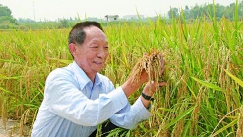像袁老致敬!袁隆平新目标每公顷20吨水稻,将来可多养活5亿人口