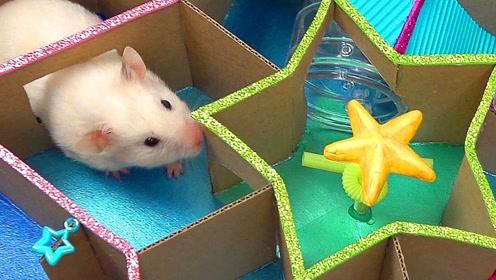 趣味小仓鼠:可爱小仓鼠五角星迷宫