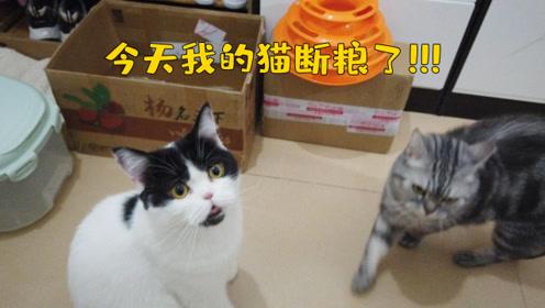今天我家的两只猫断粮饿肚子了!高价买的猫粮,却出现这种问题