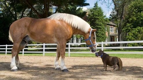 马的脚指甲能长1米?国外小马被囚禁15年,发现后让人心疼!
