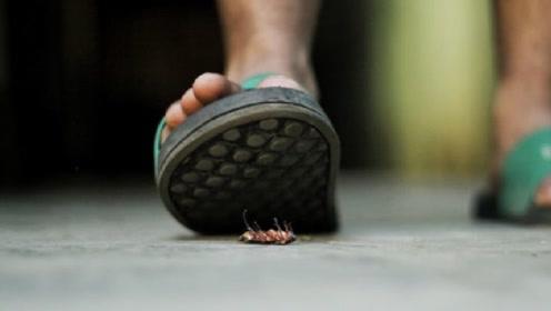 为什么有人常说:杀蟑螂不能用脚踩?要是踩了会发生什么?