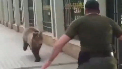 一只棕熊越狱出逃,结果被俄罗斯人一脚踢到墙上,镜头记录全过程