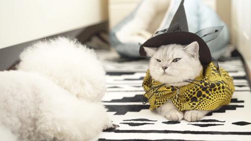悲催啊!妈妈终于答应带猫咪塔可出门Party,结果又翻车了!