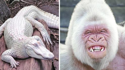 人们发现的4个白化动物