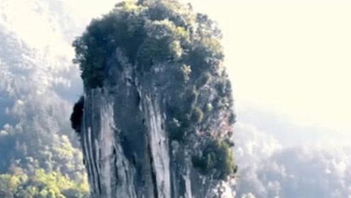 贵州天然形成的大白菜,100多米的高度,猪看到后都不敢靠近