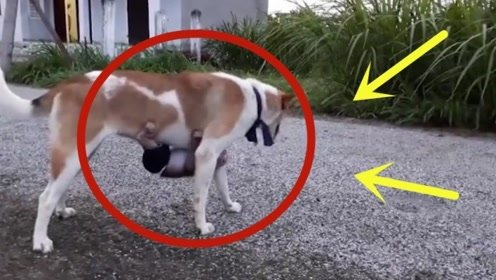 小猴子妈妈去世的早,狗狗担起当父母的责任,天天趴在狗狗身上!