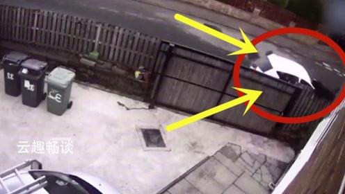 不敬业!小偷白天撬门行窃,下一秒出现他们永远不想见的人!