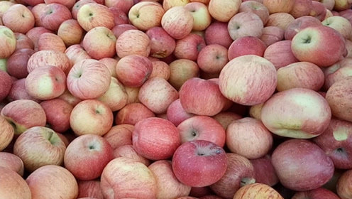 苹果到底早晨吃还是晚上吃?不少人吃错了,可惜才知道,以后别瞎吃了