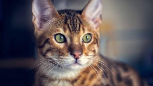 为什么猫咪的胡须不能剪,剪了又会怎样?科学家:路都不会走了