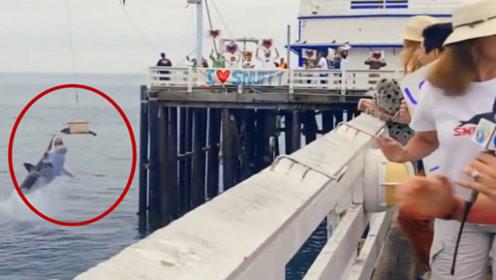 志愿者们正在放生海豹,进行到一半时却发生了意外,镜头记录全过程