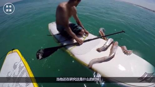 巨型鱿鱼想把男子拽下水,结果反被拉上岸,抓这么一只有福了!