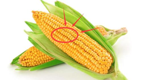 """常吃玉米""""好处""""多,能预防""""癌症""""的发生,但切忌与""""此物""""同吃"""
