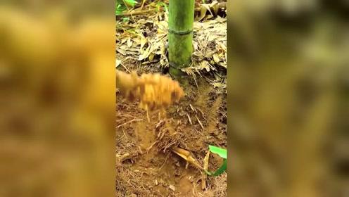 普通的竹根到了手艺人的手中,看到成品后,真是太厉害了!