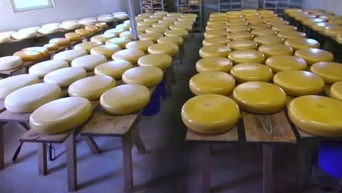荷兰一种奶酪的制作过程,开始的时候有种,做豆腐的感觉