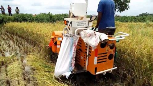国外发明迷你收割机,收割打包一步到位,一小时就能收2亩水稻