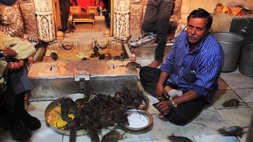 印度最恶心的寺庙,供奉了4万只老鼠,踩死还得赔偿