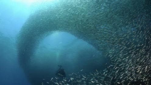 淡水鱼到海水就会死,长江黄河都会注入大海,这些鱼怎么办?
