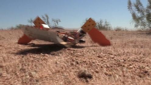 科学家受海龟启发,用纸板打造海龟机器人,能在沙地上清除地雷