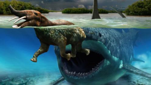 世界上最大的巨齿鲨到底有多大?它们的战斗力又有多强?