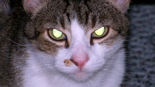为什么动物眼睛在夜晚会发光?生物学家解释:全都是进化的力量!