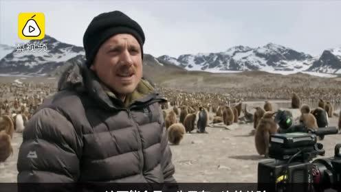 全球变暖影响极地动物!BBC摄影师在南极哭了:这里很热!