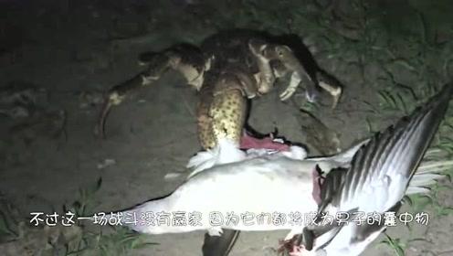 海鸥做梦也没想到,自己居然被一只螃蟹给抓住了,说出去都丢人