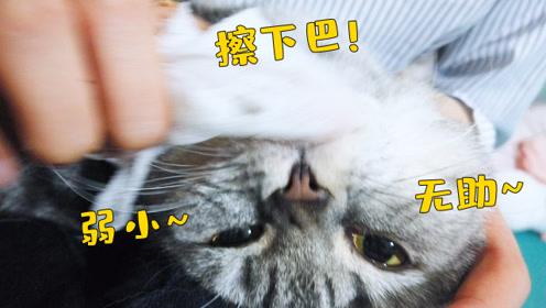 你知道吗?猫咪也会长痘痘哦!猫的痘痘和人的神似,但需要治疗哦