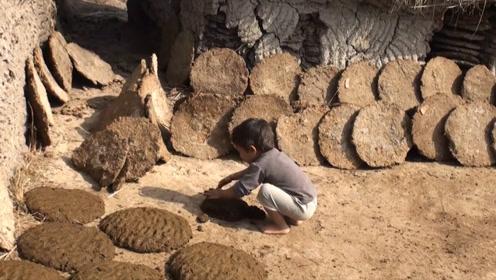 牛的全身都是宝:牛粪在印度被天价收购,成为街头抢手货