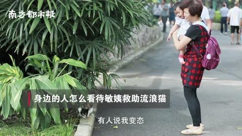 广州阿姨自费救助流浪猫20年!每天6点公园喂猫,却称不喜欢猫
