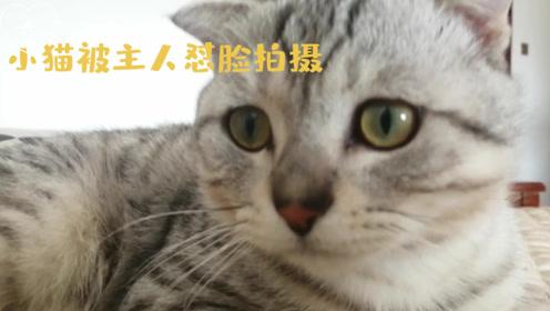 """小猫被主人""""怼脸""""拍摄,忍无可忍直接上爪子,猫:我挠你了啊!"""
