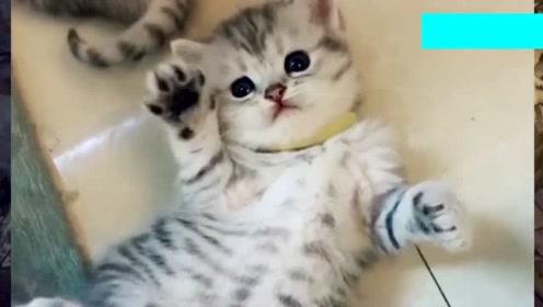 可爱粘人的小奶猫为什么会露出这样害怕的神情?这也太好玩了吧。