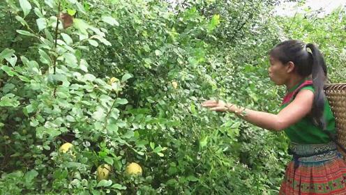 小妹丛林游玩,结果却发现新鲜的大果子,赶紧摘几个和男友共餐