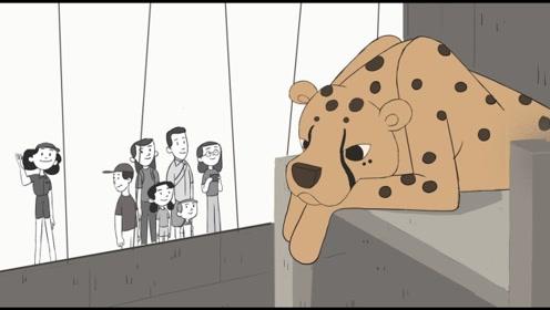 动物园超长开放,动物们却心情惆怅,原来是想要属于自己的空间!
