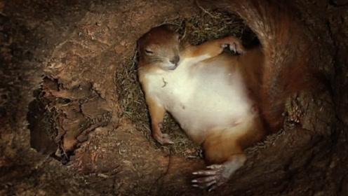 """小伙在松鼠窝装摄像头,没想到拍了个""""大爷"""",结果却有些意外!"""