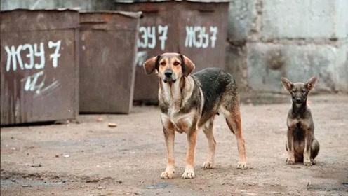 4岁男孩流落街头,却被一群流浪狗所救,相依为命生活了两年